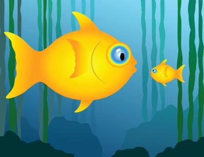 big-fish-little-fish
